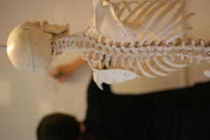 SCOM osteopati